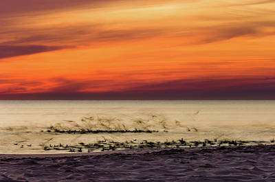 Photograph - Sunset Flock by Kurt Lischka