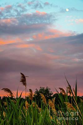 Photograph - Sunset Flora by Joann Long