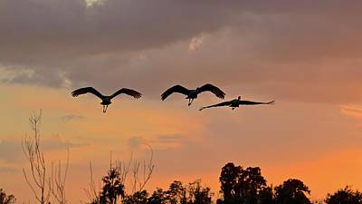 Photograph - Sunset Fly Over by Carol Bradley