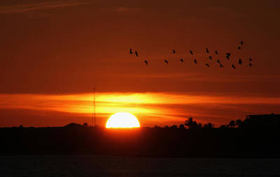 Photograph - Sunset For The Birds by Bob Slitzan