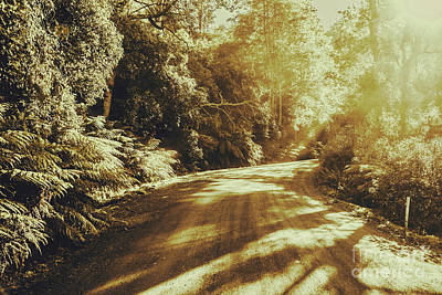 Nature Art Photograph - Sunset Forest Drive by Jorgo Photography - Wall Art Gallery