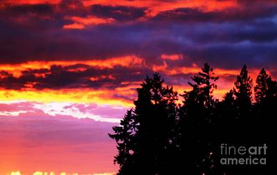 Photograph - Sunset Forest by Nick Gustafson