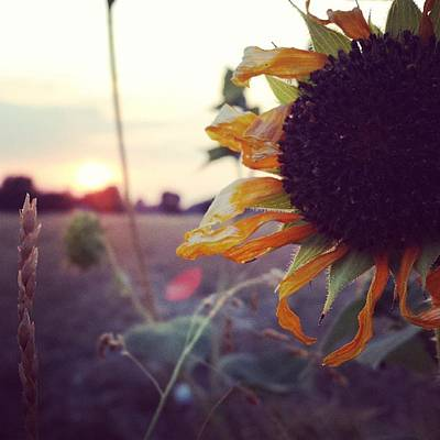 Sunflowers Wall Art - Photograph - Sunflower by Kat Couch