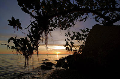 Photograph - Sunset From The Mangroves by Daniel Woodrum