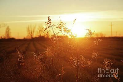 Photograph - Sunset Glow by Scott Pellegrin