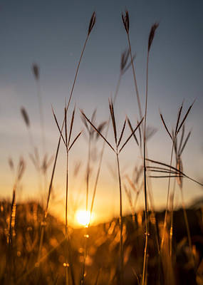 Photograph - Sunset Grass by Daniel Marcion