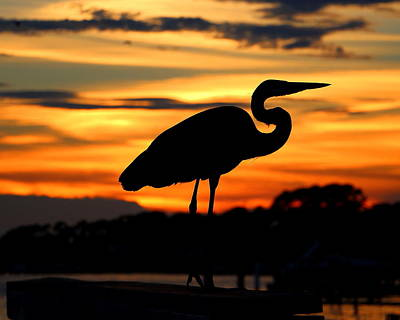 Photograph - Sunset Heron by Larry Beat