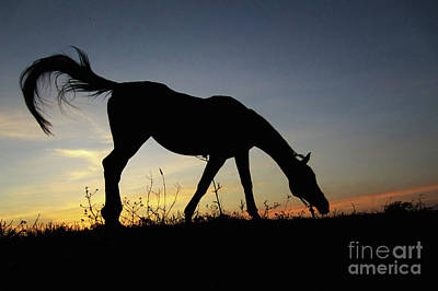 Sunset Horse Art Print