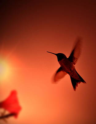 Sunset Photograph - Sunset Hummingbird by Emily Stauring