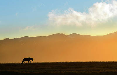Photograph - Sunset Icelantic Horse Silhouette by Dave Dilli