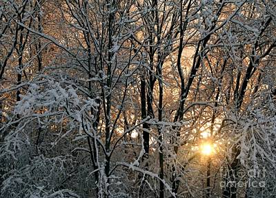 Photograph - Sunset In A Snow Covered Forest - 2 by Kenny Glotfelty