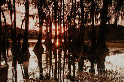 Photograph - Sunset In Caddo Lake by Iris Greenwell