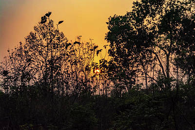 Photograph - Sunset In Chitwan by Maria Coulson