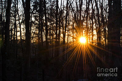 Photograph - Sunset In My Backyard by Donna Brown