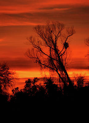 Photograph - Sunset In Sacramento by Pat Moore
