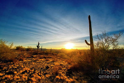 Photograph - Sunset In The Desert by David Arment