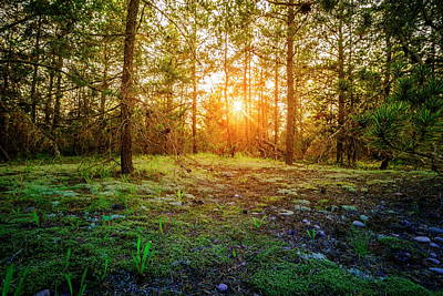 Photograph - Sunset In The Forest by Alexey Stiop