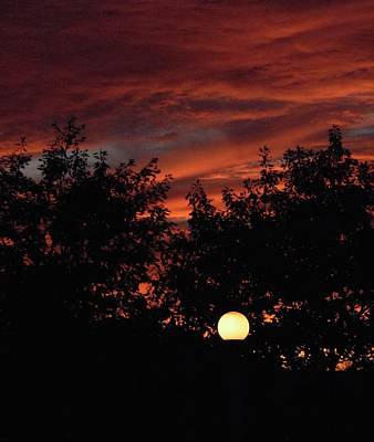 Photograph - Sunset In The Park by Stephanie Moore