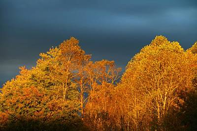 Photograph - Sunset In The Treetops 1 by Kathryn Meyer