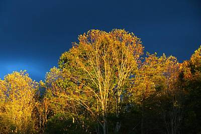 Photograph - Sunset In The Treetops 2 by Kathryn Meyer