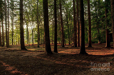 Photograph - Sunset In The Wood by Leonardo Fanini