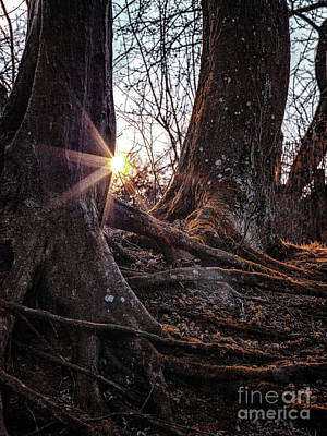 Photograph - Sunset In The Woods by Benjamin Wiedmann