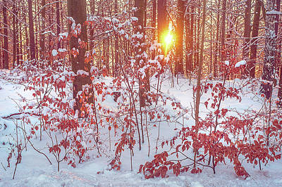 Photograph - Sunset In Winter Forest by Jenny Rainbow
