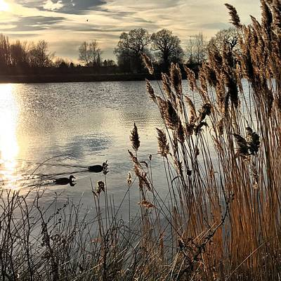 Duck Photograph - Sunset Lake  by Kathy Spall