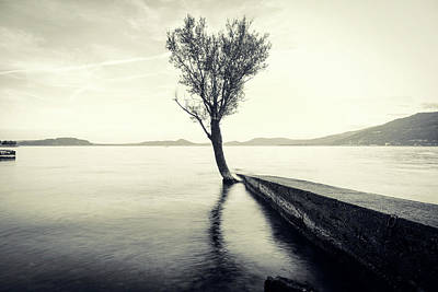 Photograph - Sunset Landscape With A Tree In The Background Immersed In The L by Alfio Finocchiaro