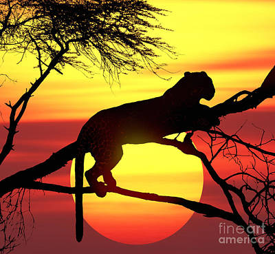 Photograph - Sunset Leopard by Warren Photographic