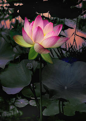 Evening Digital Art - Sunset Lotus by Jessica Jenney
