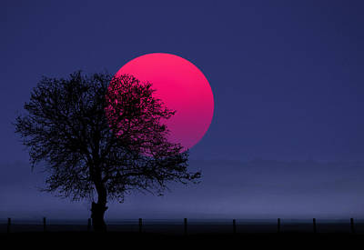 Photograph - Sunset Magenta by Bess Hamiti