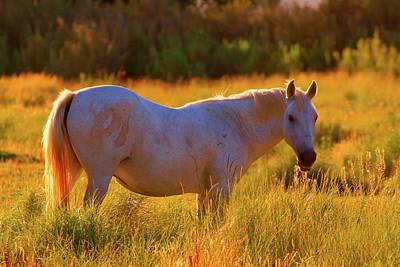 Sunset Mare Print by Gus McCrea