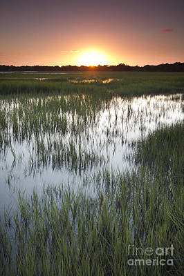 Lowcountry Marshes Photograph - Sunset Marsh Grass by Dustin K Ryan