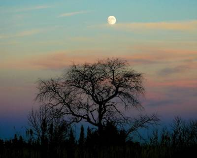Photograph - Sunset Moon by Jeanette Fellows
