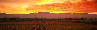 Grapevine Photograph - Sunset, Napa Valley, California, Usa by Panoramic Images