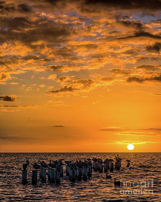 Photograph - Sunset Naples Florida by Damon Powers