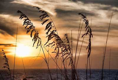 Photograph - Sunset Naples, Florida by John Black