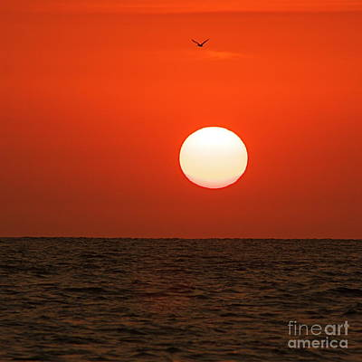 Art Print featuring the photograph Sunset by Nicola Fiscarelli