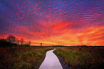 Photograph - Sunset Of The Year Over Pine Glades Natural Area by Justin Kelefas