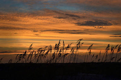 Photograph - Sunset On Beach Grass by Dana Sohr