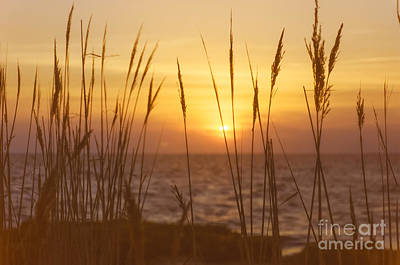 Photograph - Sunset On Delaware Bay by Debra Fedchin