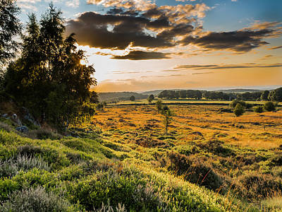 Photograph - Sunset On Heath by Nick Bywater