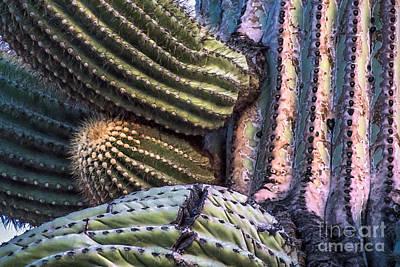 Digital Art - Sunset On Saguaro Cactus by Georgianne Giese