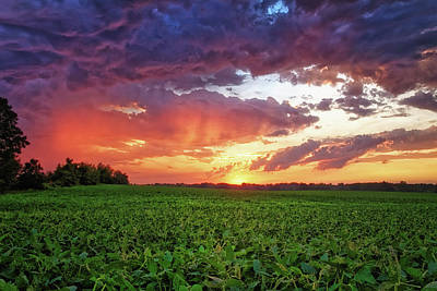Photograph - Sunset On Soybeans by Lars Lentz
