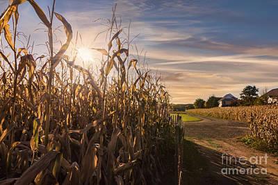 Sunset On The Corn Field Art Print