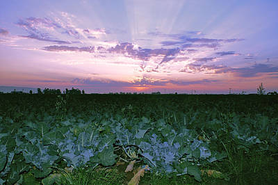 Photograph - Sunset On The Fields by Gary Brandes