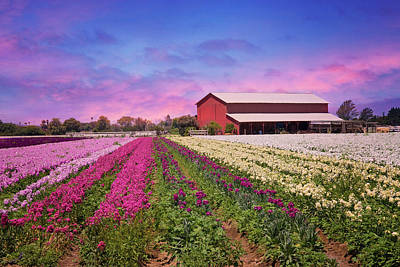 Photograph - Sunset On The Flower Field by Lynn Bauer