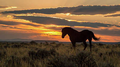 Sunset On The Mustang Art Print by Jack Bell