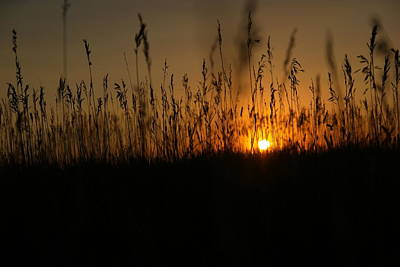 Birds Rights Managed Images - Sunset on the plains Royalty-Free Image by Jeff Swan